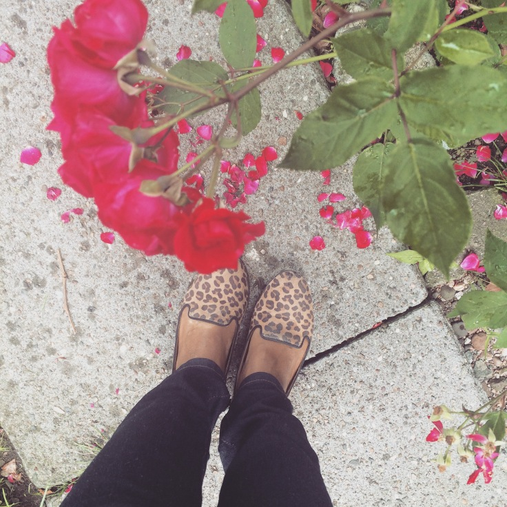 My leopard print flat loafers. Got these from Tar-jay many years ago. They are a bit beaten but still going strong.