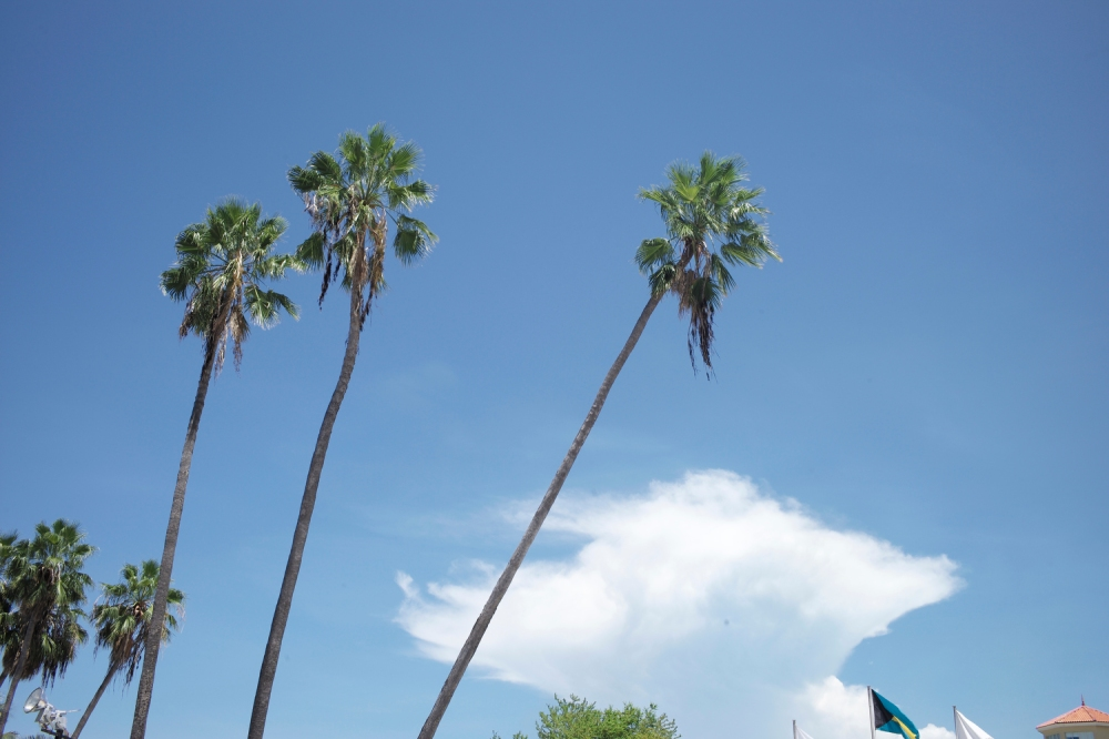 Palm trees and blue skies. Some people get to see it everyday but I don't. I would like for it to be my daily view one day.